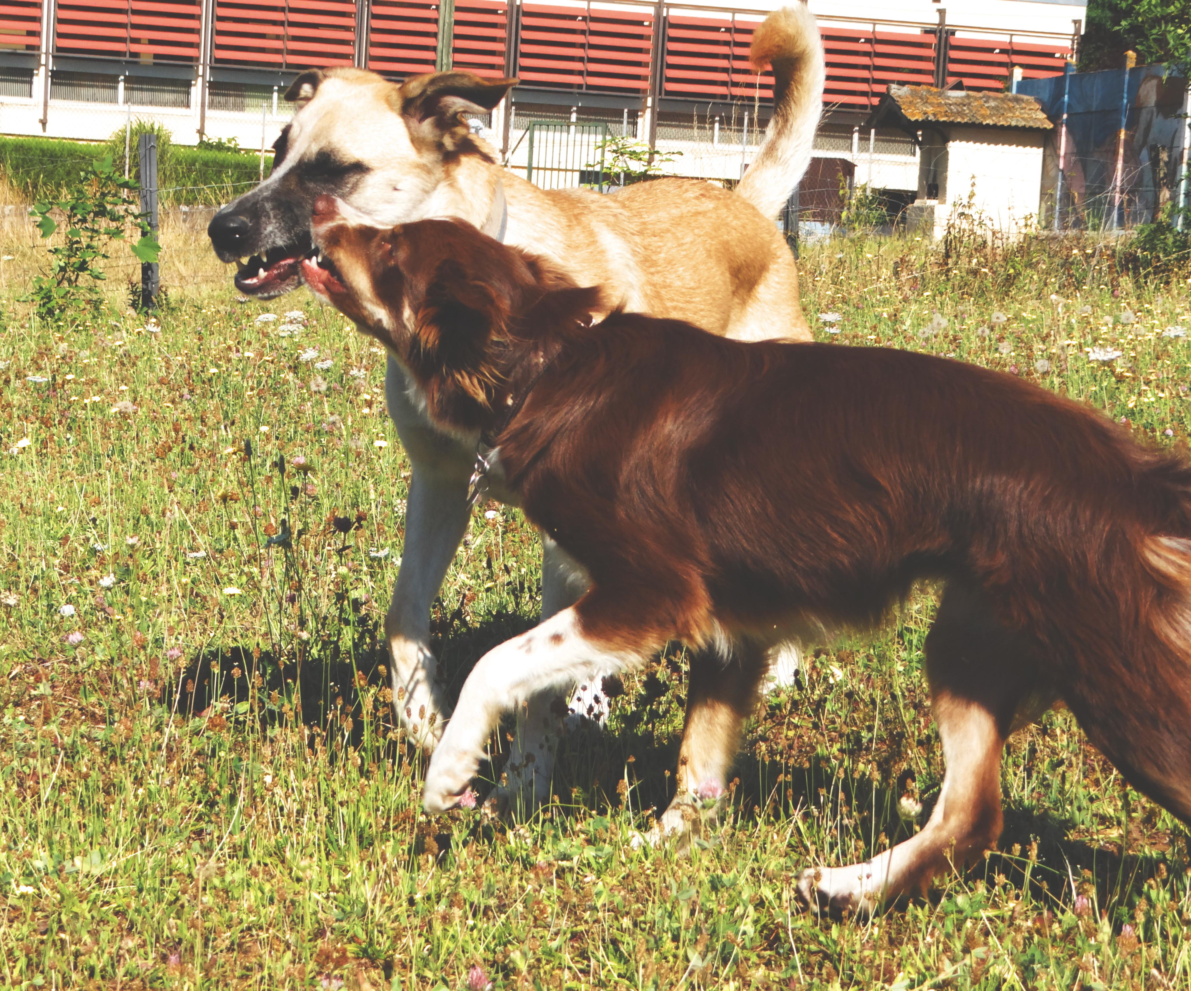 rééducation canine